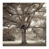 Hampton Maple 1 Print by Alan Blaustein