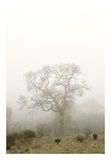 Oak Tree 63 Posters by Alan Blaustein
