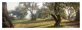 Oak Tree 71 Posters by Alan Blaustein