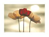 Icelandic Poppies Poster by Yoshizo Kawasaki