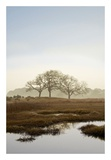 Oak Tree 66 Prints by Alan Blaustein