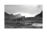 Grazing Together, Lofoten Islands Prints by Andreas Stridsberg