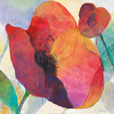 Poppy I Poster by Doug Kennedy