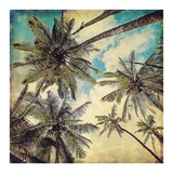 Kauai Island Palms Prints by Melanie Alexandra Price