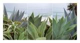 Laguna Coast 2 Prints by Alan Blaustein