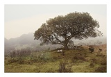 Oak Tree 54 Posters by Alan Blaustein