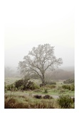 Oak Tree 56 Posters by Alan Blaustein