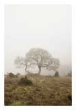 Oak Tree 26 Prints by Alan Blaustein