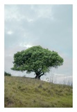Oak Tree 80 Print by Alan Blaustein