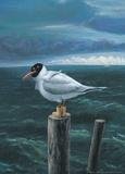 Seagull Poster by Rudi Hurzlmeier