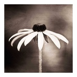 Simply Stated Prints by Carolyn Cochrane