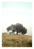 Oak Tree 52 Poster by Alan Blaustein