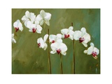 Orchid in Greens Posters by Nicola Acaster