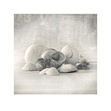 Still Life of Shells II Prints by Ian Winstanley