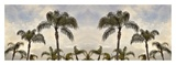 Palm Banner 2 - Color Prints by Alan Blaustein