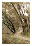 Oak Tree 49 Posters by Alan Blaustein
