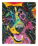Smiling Collie Prints by Dean Russo