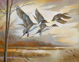 Pintails Prints by Ruane Manning