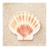 Scallop Shell Posters by Carolyn Cochrane