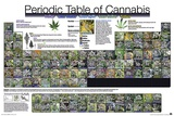 The Periodic Table of Cannabis Poster by  Unknown