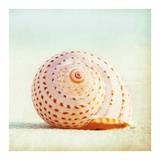 Seashell Voices Prints by Carolyn Cochrane