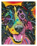 Smiling Collie Print by Dean Russo