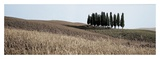 Val d'Orcia Pano 3 Prints by Alan Blaustein