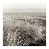 Tuscan Coast Dunes 3 Prints by Alan Blaustein