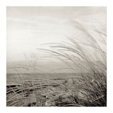 Tuscan Coast Dunes 1 Poster by Alan Blaustein
