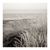 Tuscan Coast Dunes 2 Posters by Alan Blaustein