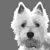 West Highland Terrier Poster by Emily Burrowes