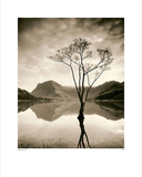 Silver Birch – Buttermere Posters by Mike Shepherd