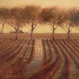 Vintage Sunlit Vineyard Prints by Paul Mathenia