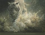 White Lightning Posters by John Seerey-Lester