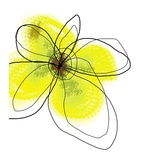 Yellow Petals Four Plakater af Jan Weiss