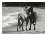 Young Mustangs on Beach Láminas por Traer Scott