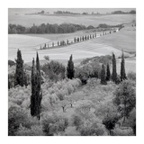 Tuscany 6 Poster by Alan Blaustein