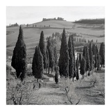 Tuscany 4 Prints by Alan Blaustein
