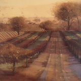 Vineyard Vista Posters by Paul Mathenia