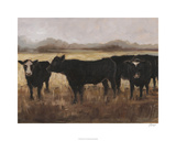 Black Cows I Limited Edition by Ethan Harper