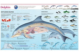 Infographic of the Anatomy, Habitat and Bottlenose Dolphin Breeding Photo