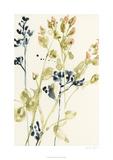 Blush Buds I Limited Edition by Jennifer Goldberger
