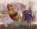 Blue Tail Rooster Posters by Alma Lee