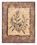 Vintage Herbs-Sage Posters by Constance Lael