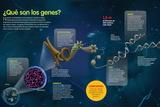 Infografía Acerca De Los Genes, Su Función, Estructura Y Localización En Las Células Humanas Print