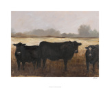 Black Cows II Limited Edition by Ethan Harper