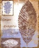 Leaf III Print by Tiffany Budd