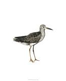 Sea Bird III Premium Giclee Print by Grace Popp
