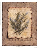 Vintage Herbs - Rosemary Posters by Constance Lael