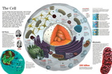 Infographic of the Composition of the Human Cell and the Principal Cell Theories Prints